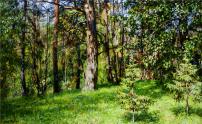 Картины художника Кугач Михаил Юрьевич